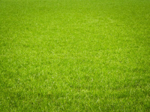 Mähroboter Rasen